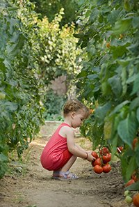girls picked tomatoes - Using Colloidal Silver for Healthier Fruits and Vegetables