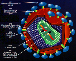 Can Silver Nanoparticles Stop AIDS Infections?