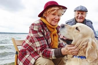 15 Healing, Money-Saving Colloidal Silver Pet Benefits