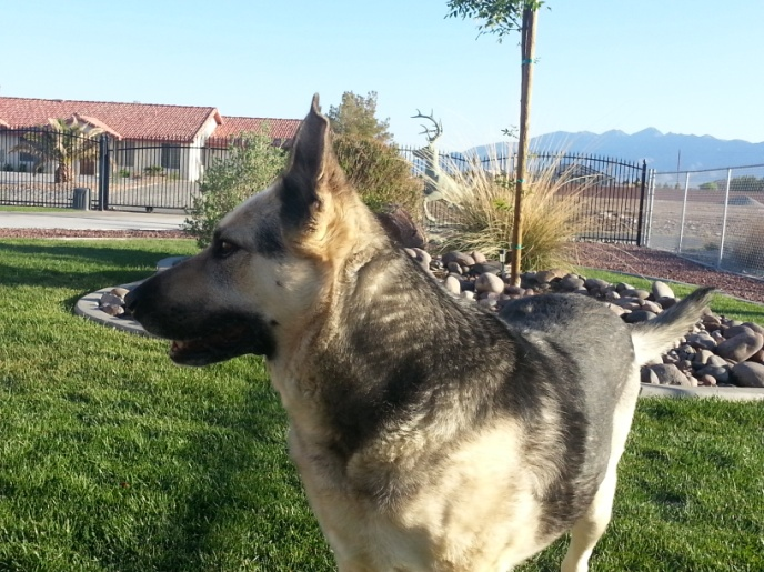 C:\Users\Barwick\Pictures\Dogs at Pahrump\Majestic lady.jpg