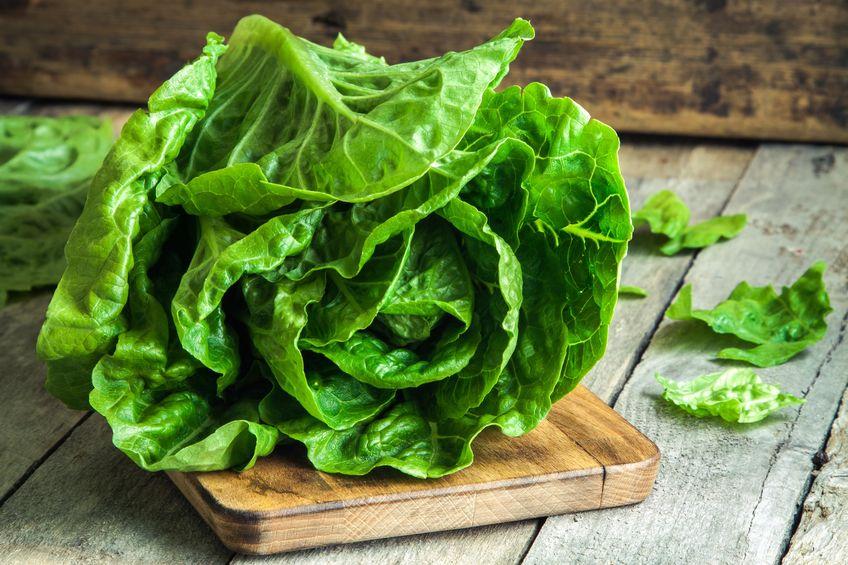 Ripe organic green salad Romano - Colloidal Silver and E. Coli