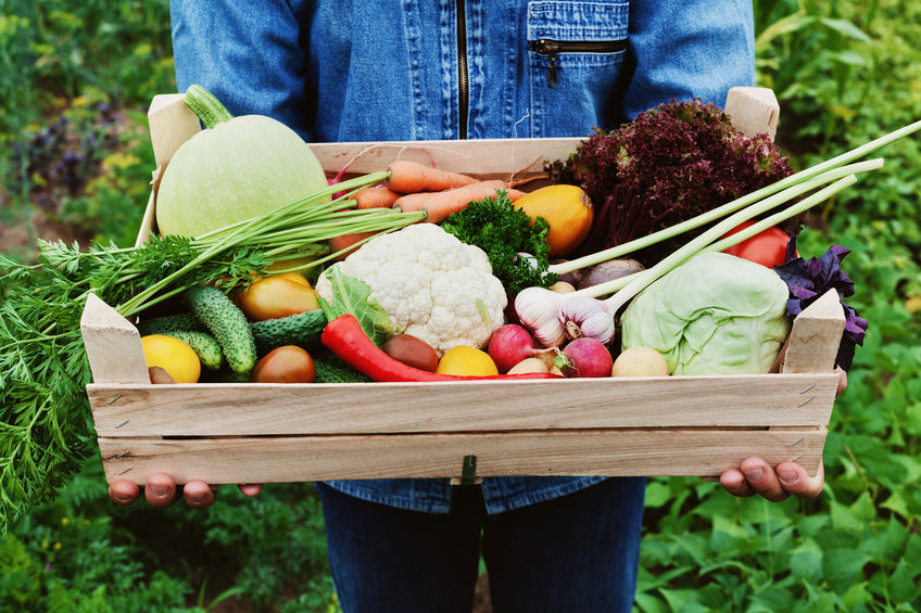 A farmer holds a wooden box with a crop of vegetables and harvest of root on the background of the garden. Organic food. Healthier, Longer-Lasting Fruits and Vegetables with Colloidal Silver