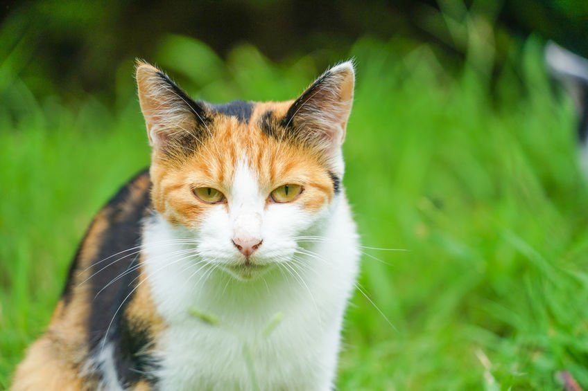 Stop Cats from Spraying; Eliminate Pet Odors with Colloidal Silver