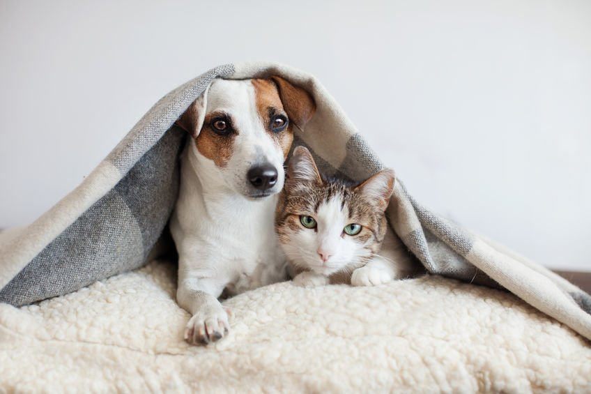 Dog and cat together - Can Colloidal Silver Help Pets with Mange?