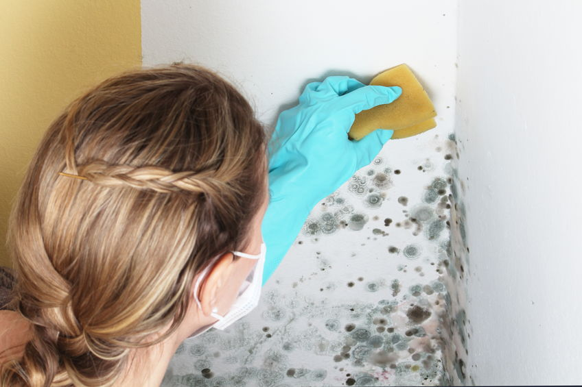 Woman removes mold from a wall - Can Colloidal Silver Kill Toxic Mold?