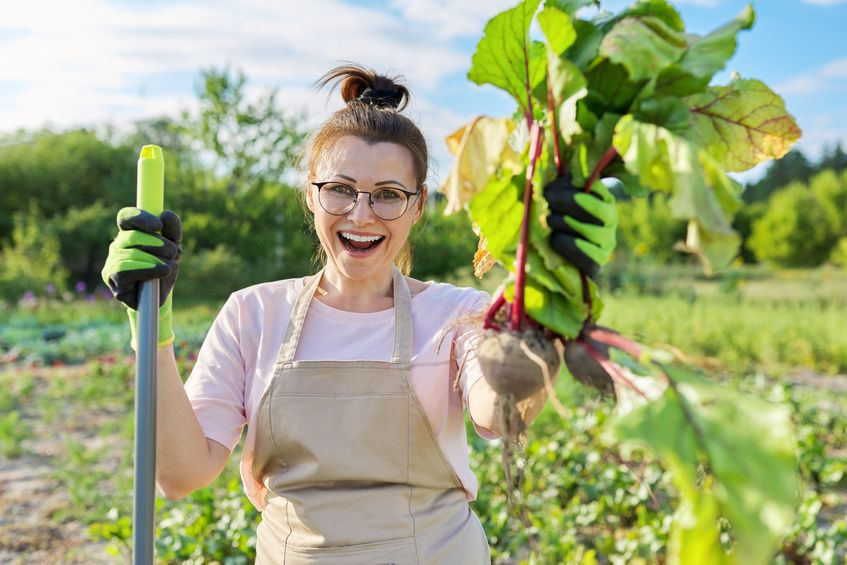 Smiling woman gardener farmer in apron with dug up fresh beetroot vegetables - Bountiful Crop Yields in Your Garden with Colloidal Silver!